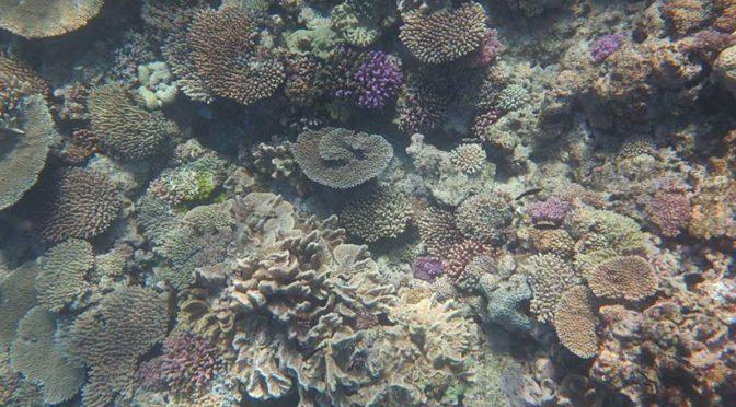 Ocean acidity devastates corals
